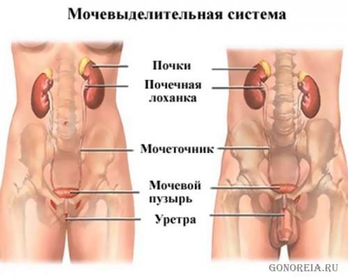 Дискомфорт в внизу таза особенно в влагалище